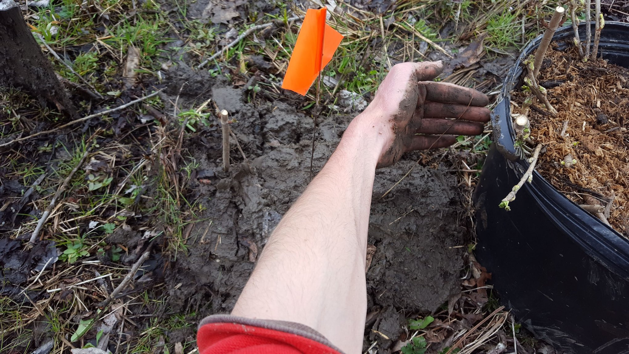 Muck mound plantings