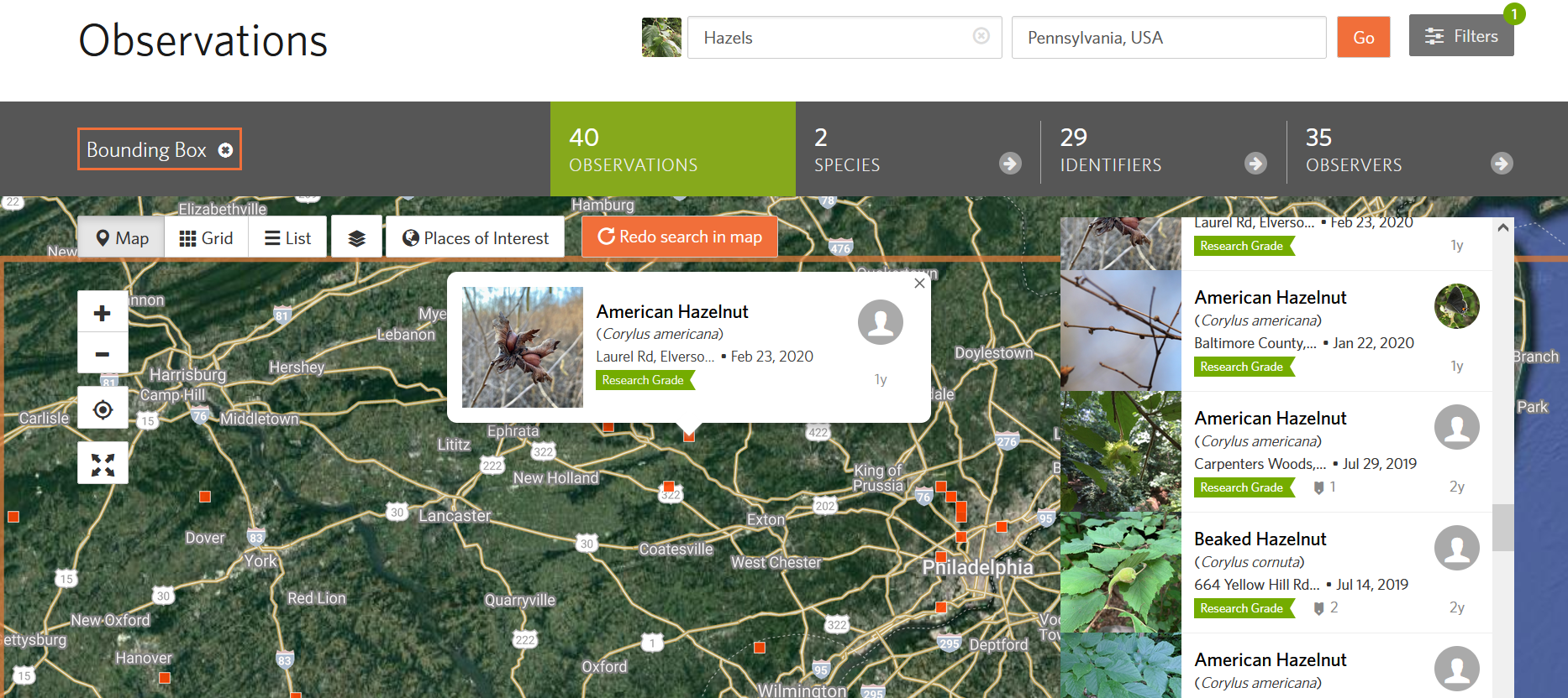 iNaturalist search results zoomed in on southeast PA for observations of Corylus spp.